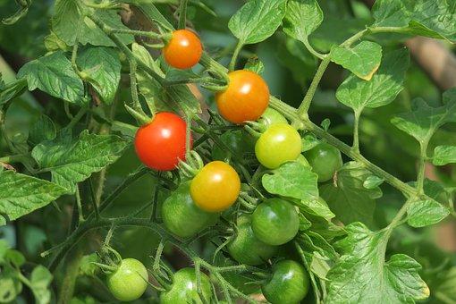 balkon-tomaten-zelf-kweken