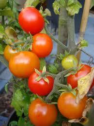 Hoe kweek ik groenten op het balkon degeneeskrachtigekeuken nl - Groenten in potten op balkons ...