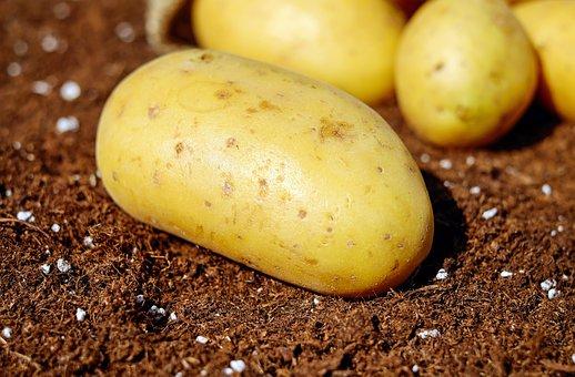 Aardappelen voor je hersenen