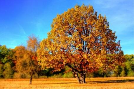 boom-en-herfstbos