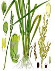koksblog rijst