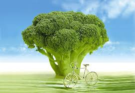 groenblog broccoli met fietsje
