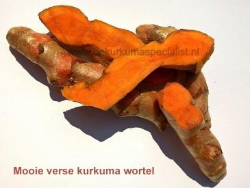 verse-kurkuma-wortel-dekurkumaspecialist