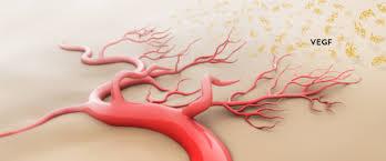 angiogenese-uitleg