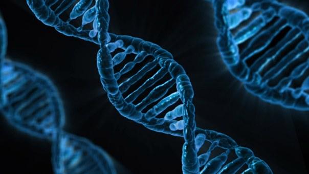 Groente-houdt-je-DNA-gezond