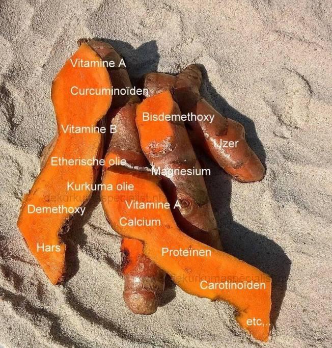 analyse-kurkuma-plant
