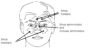 sinusitis-en-ayurvedische-adviezen