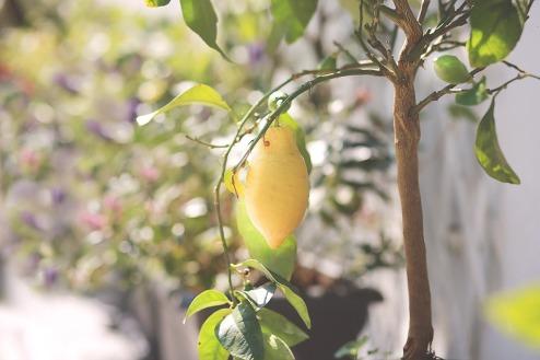 citroen-boompje