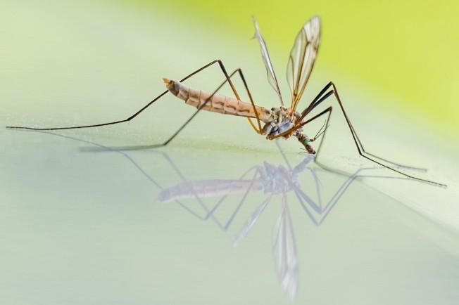 muggen-steken