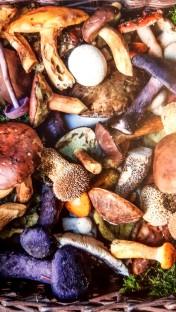 paddenstoelen mand